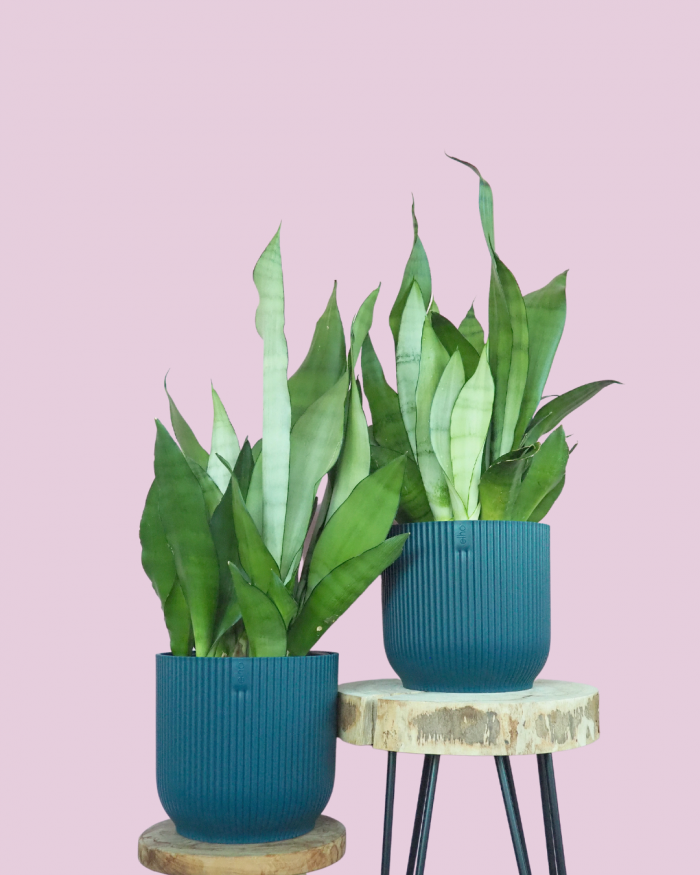 Elho zelfwaterende potten